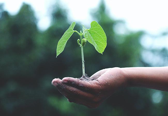 Ein Setzling ist in eine Hand gebettet, im Hintergrund ist ein Wald zu sehen. Es geht um den Wunsch nach Klimaneutralität. Bild: Pexels/Akil Mazumder